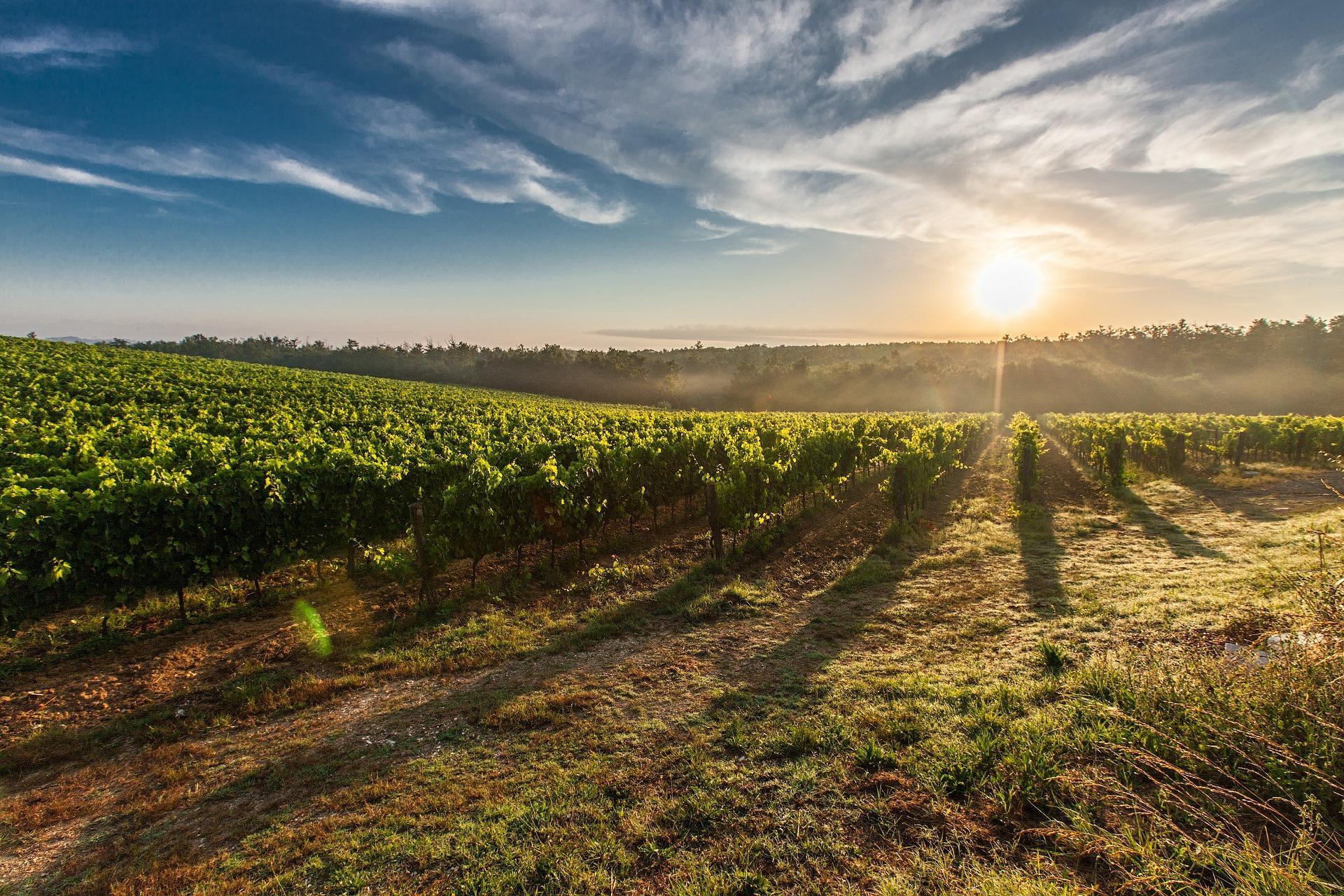 Poles d'expertises - Viniculture
